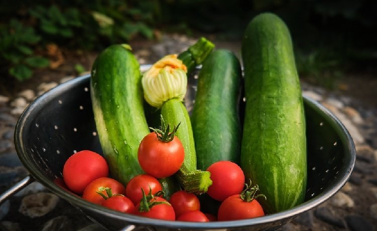 Cucumber and Tomato diet