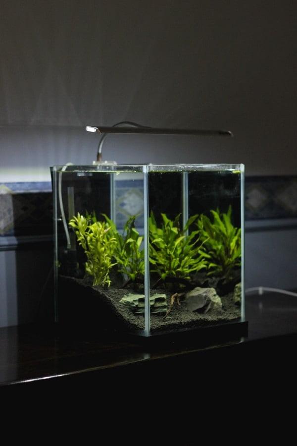 fish tank dark